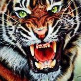 Tigris