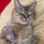 Cat_Robutt