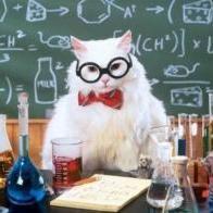 KittyCat_PhD