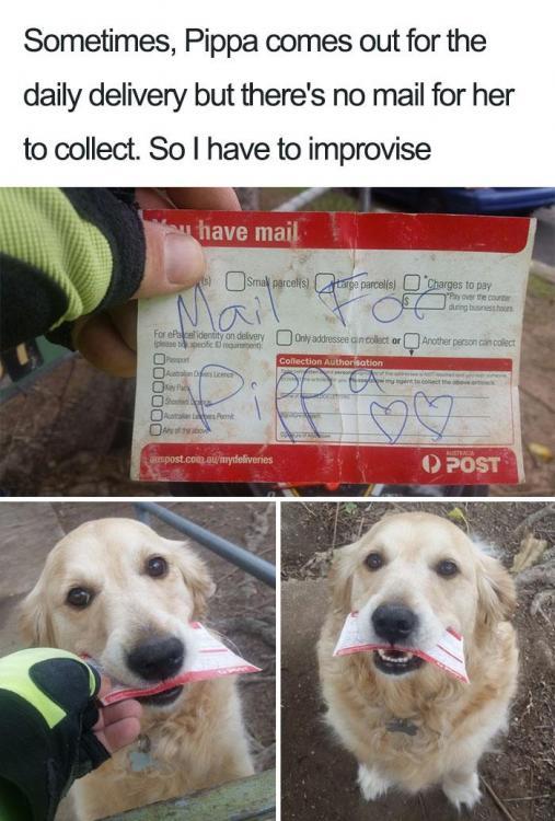 cute-wholesome-dog-puppy-memes-275-590985f418070__700.jpg