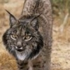 How competative are Post-Docs? - last post by St Andrews Lynx