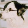 dogtypingonakeyboard