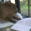 CleverCapybara